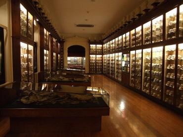 Museo Canario Gran Canaria