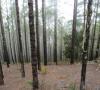 Parco naturale di Tamadaba